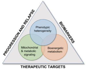 A Venn diagram inside a triangle. The three circles of the Venn diagram are: 1, Phenotypic heterogeneity; 2, Bioenergetic metabolism; and 3, Mitochondrial & metabolic signaling. The sides of the triangle are labeled Biomarkers (corresponding to circles 1 & 2), Therapeutic targets (corres. to cir. 2 & 3), and Progression and Relapse (corres., to cir. 3 and 1).